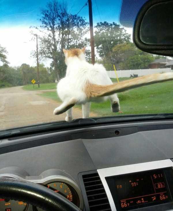 funny-cats-pics (27)