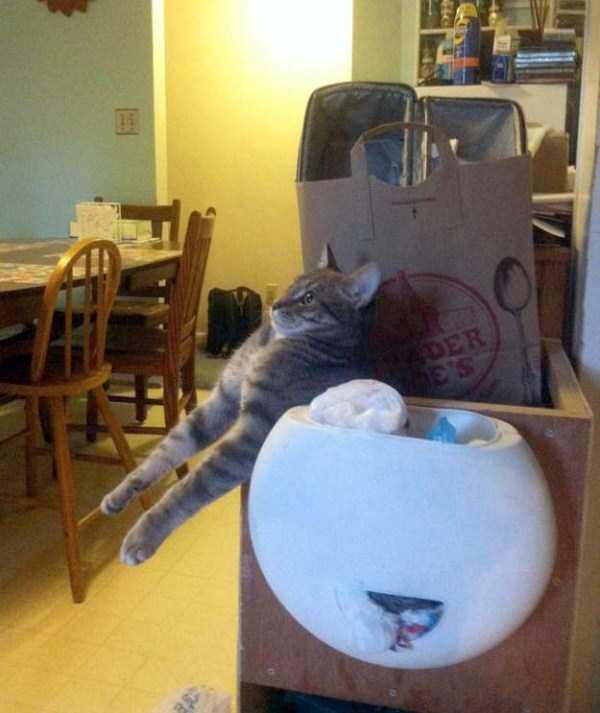 funny-cats-pics (28)