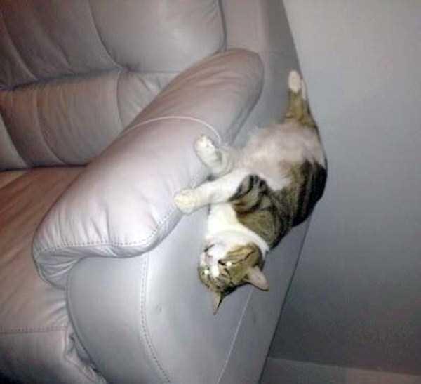 funny-cats-pics (3)