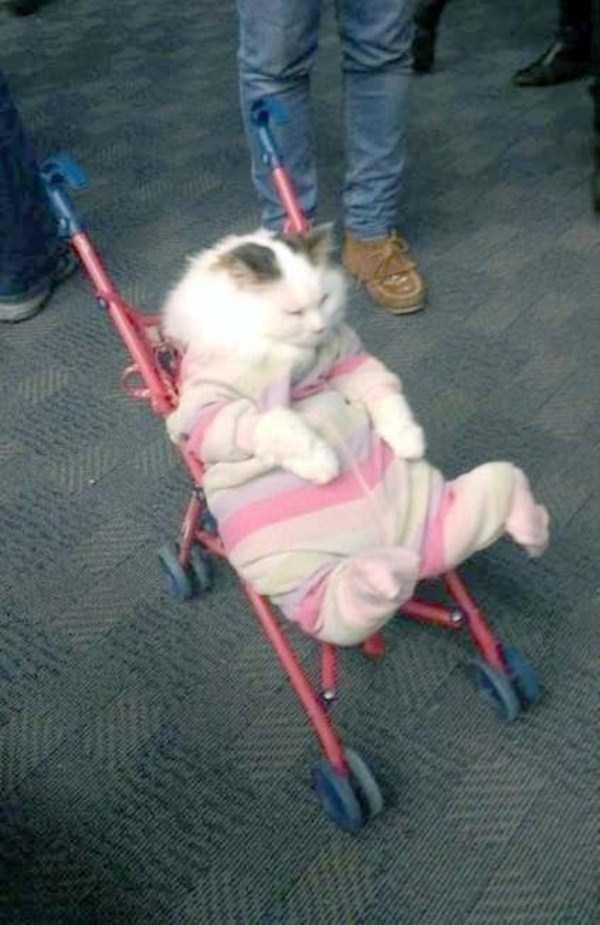 funny-cats-pics (30)