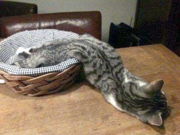 funny-cats-pics (33)