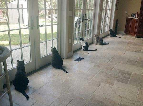 funny-cats-pics (36)