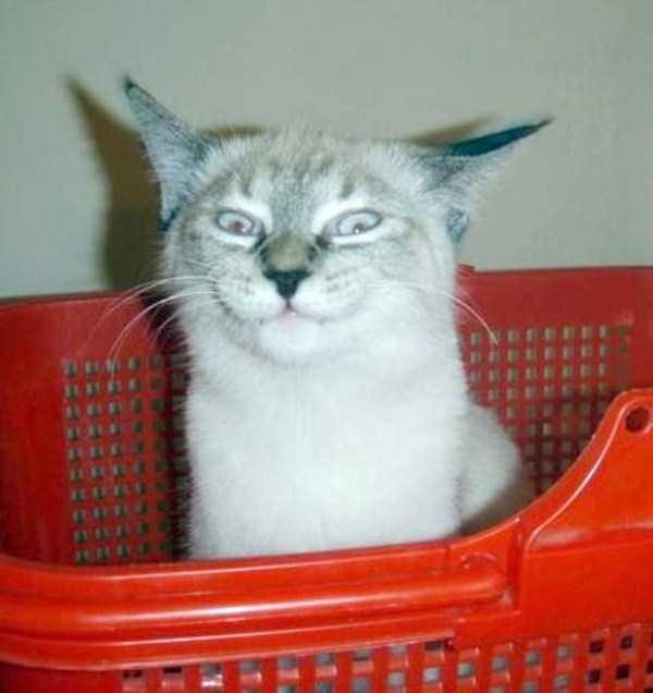 funny-cats-pics (37)