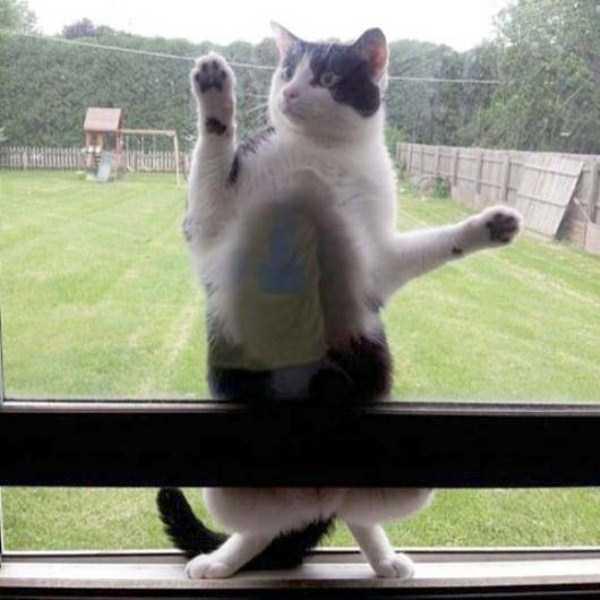funny-cats-pics (38)