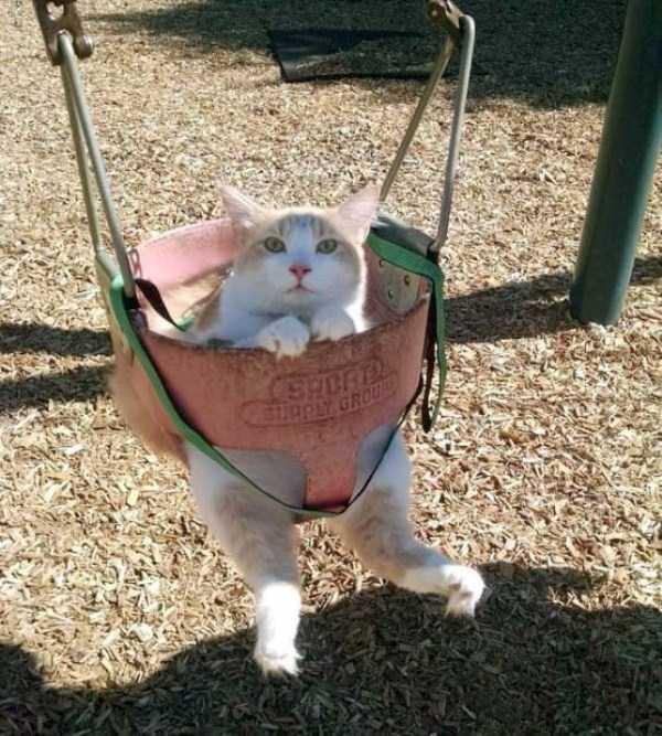 funny-cats-pics (39)