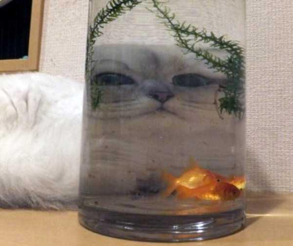 funny-cats-pics (4)