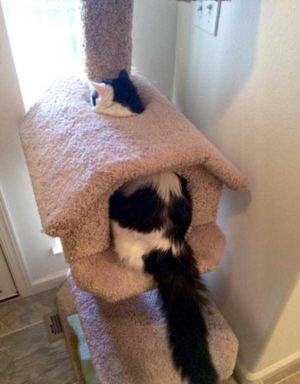funny-cats-pics (5)