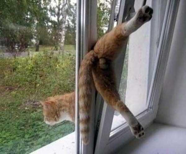 funny-cats-pics (8)