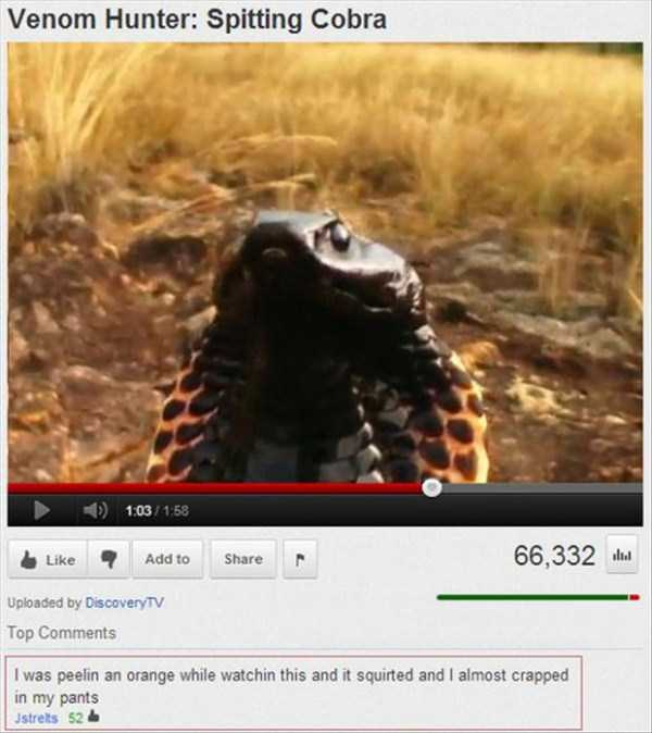 funny-hilarious-youtube-comments (44)