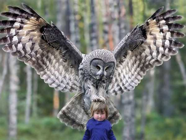 girl-holding-an-owl (6)