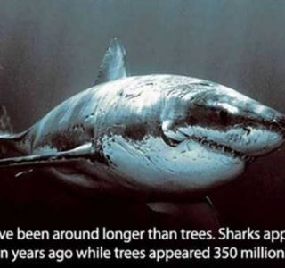 It's Time for Some Cool and Interesting Facts – Part 16 (31 photos)