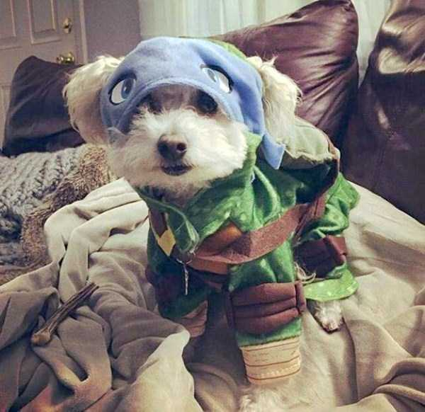 pets-in-halloween-costumes (1)