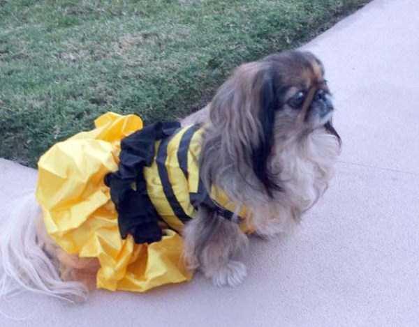pets-in-halloween-costumes (10)