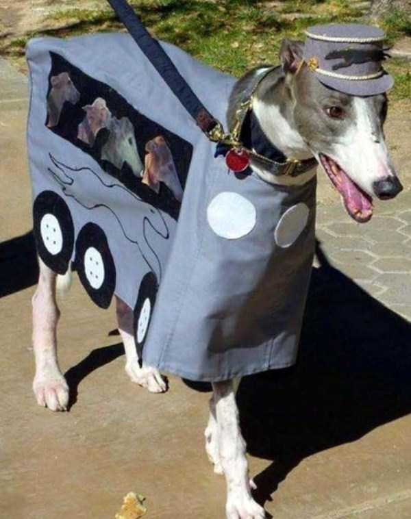 pets-in-halloween-costumes (12)