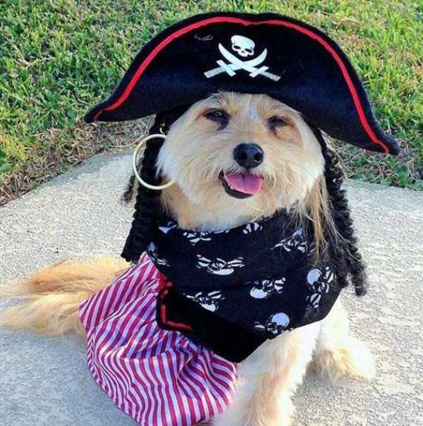 pets-in-halloween-costumes (14)