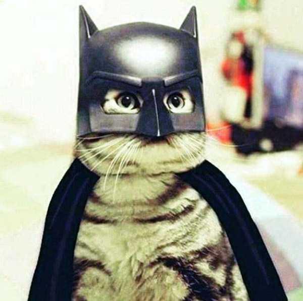 pets-in-halloween-costumes (3)