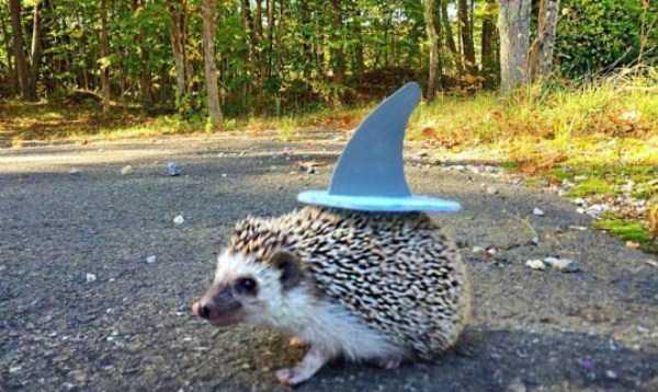 pets-in-halloween-costumes (4)