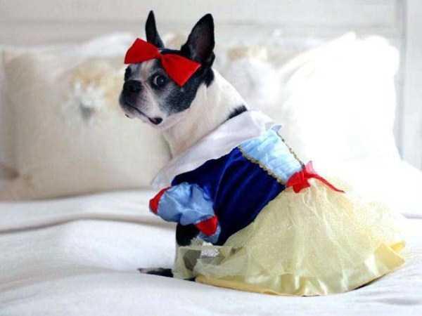 pets-in-halloween-costumes (6)