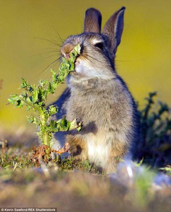 rabbit-eats-spiky-plant (0)