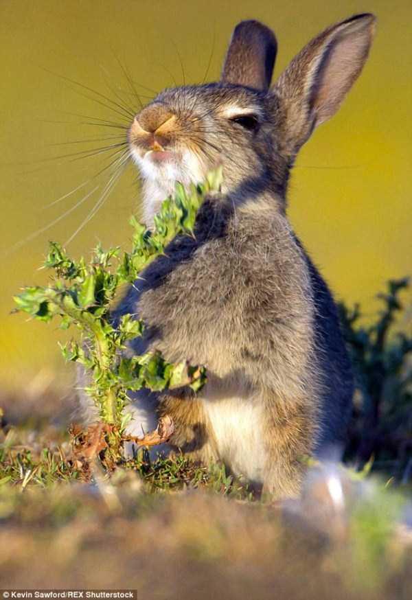 rabbit-eats-spiky-plant (1)