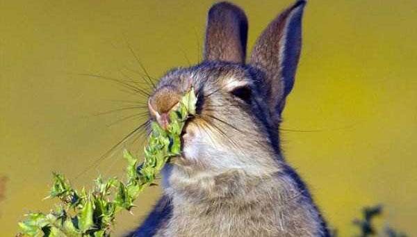 rabbit-eats-spiky-plant-(4)