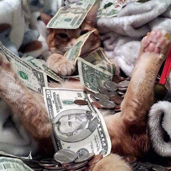 rich-cats (1)