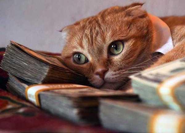 rich-cats (10)