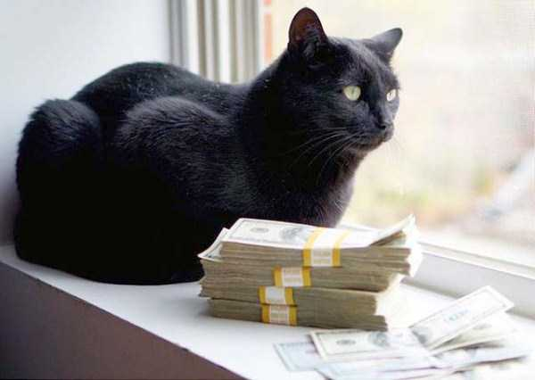 rich-cats (11)
