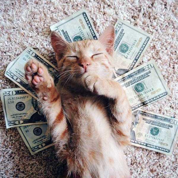 rich-cats (12)