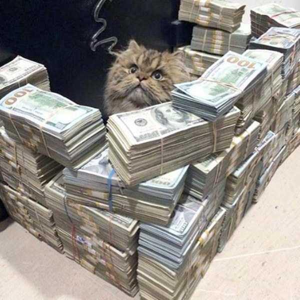 rich-cats (13)