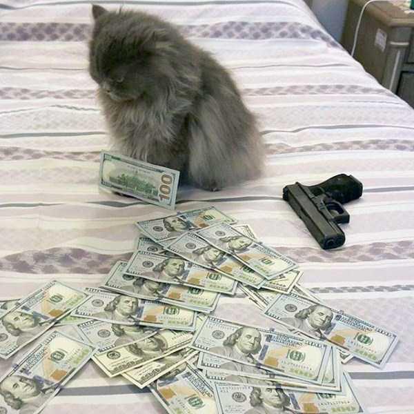 rich-cats (14)