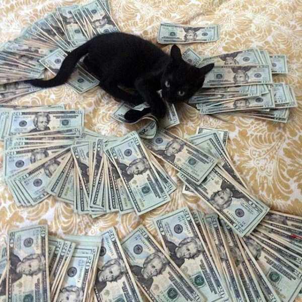 rich-cats (15)