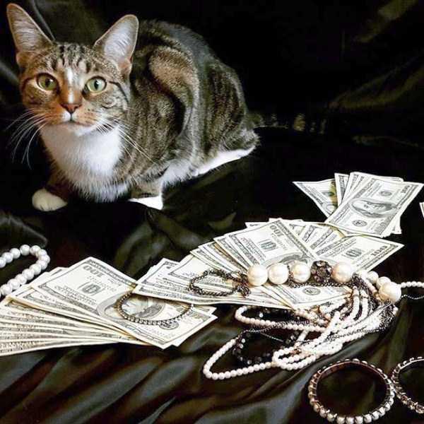 rich-cats (16)