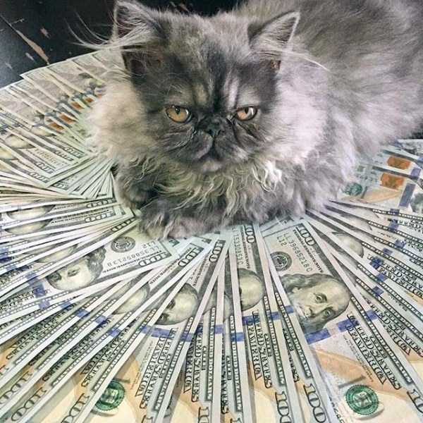 rich-cats (17)