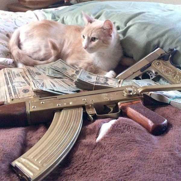 rich-cats (19)