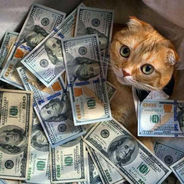 rich-cats (2)