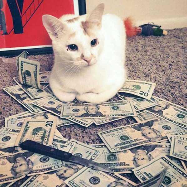 rich-cats (20)