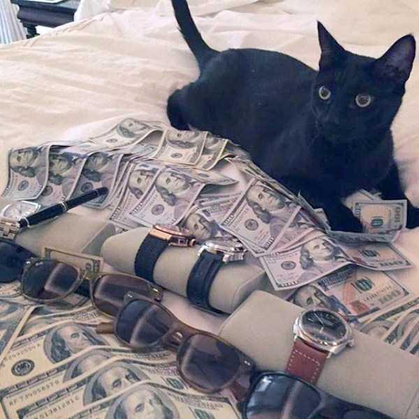 rich-cats (21)