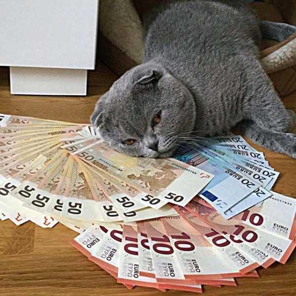 rich-cats (22)