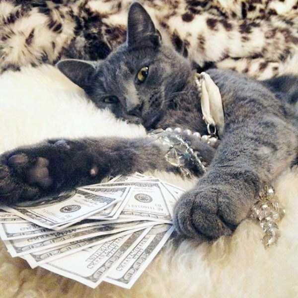rich-cats (23)