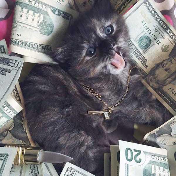 rich-cats (24)