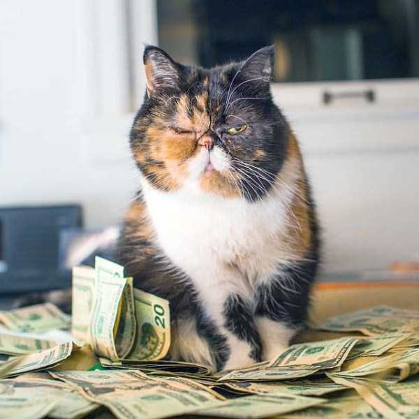 rich-cats (25)