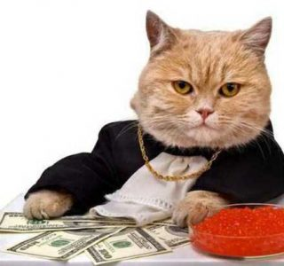 Cats Who Are Richer Than You Can Imagine (30 photos)