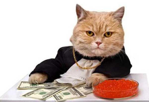 rich-cats (26)