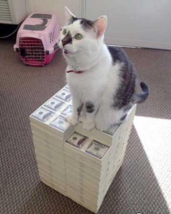 rich-cats (27)