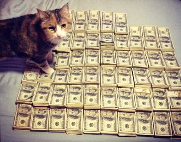 rich-cats (28)