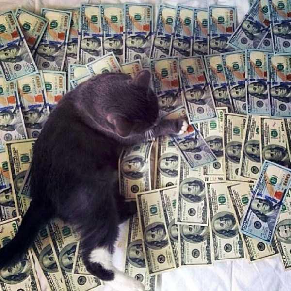 rich-cats (29)