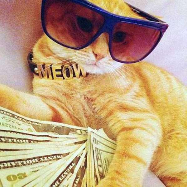 rich-cats (3)