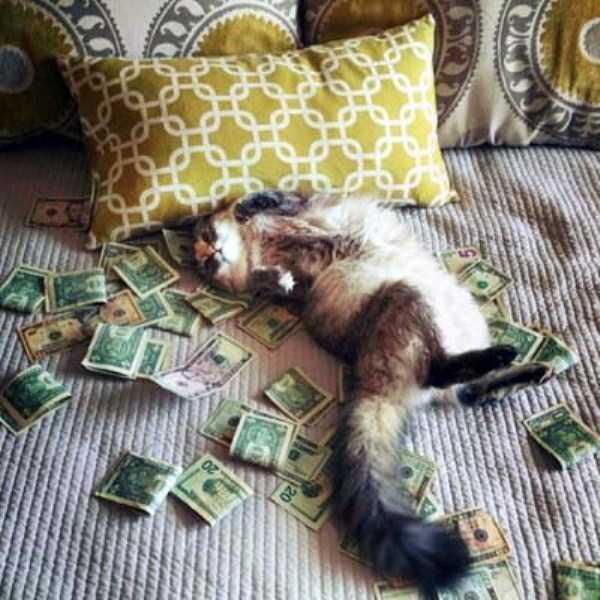 rich-cats (30)
