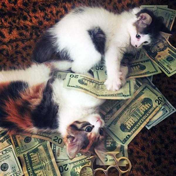 rich-cats (4)